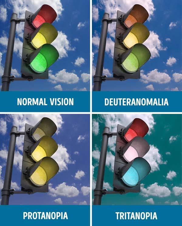 6-buta-warna-b