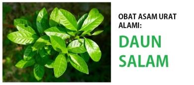 daun-salam-asam