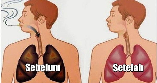 makanan-untuk-membersihkan-paru-paru